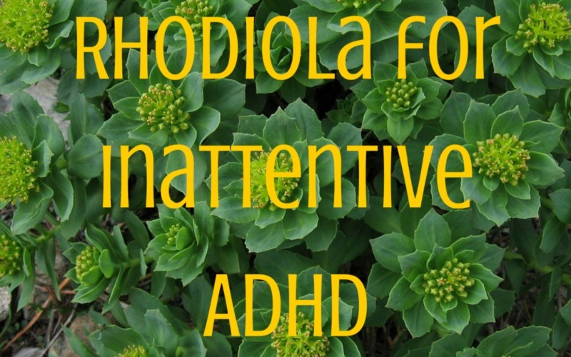 Rhodiola for Inattentive ADHD » Our Kids Can Thrive!