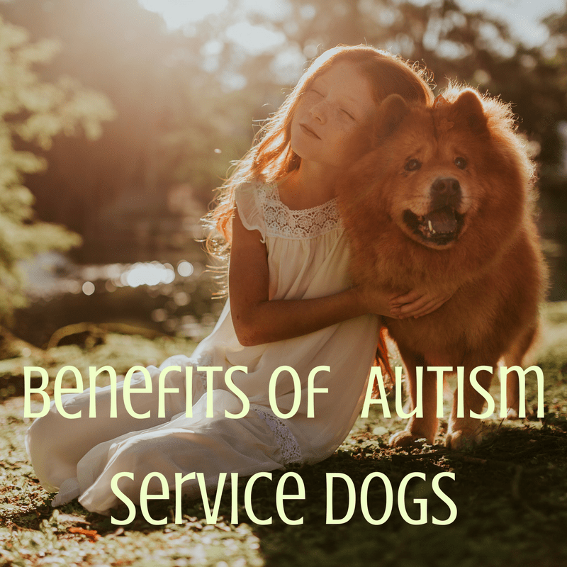Autism Service Dogs:  Life-Altering Companions for Autistic Kids