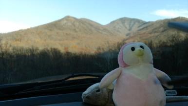 Penge enjoying one of the Smoky Mountain Views