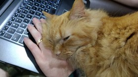 """Wheezy """"helping"""" dad with his computing"""