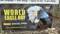 World Eagle Day at the World Bird Sanctuary