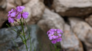 Flowers at the creek in the Spearfish, SD, canyon, running south from Spearfish to Cheyenne Crossing