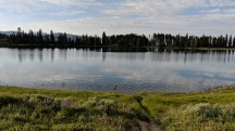 Geese in a row at Indian Pond in Yellowstone National Park
