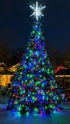 20181128 Dollywood Tree