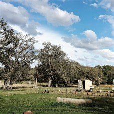 The pasture of Golden Acres Goat Ranch