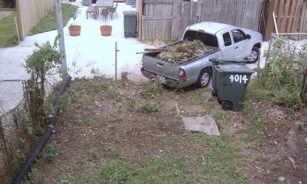 backyard hedges hauled away