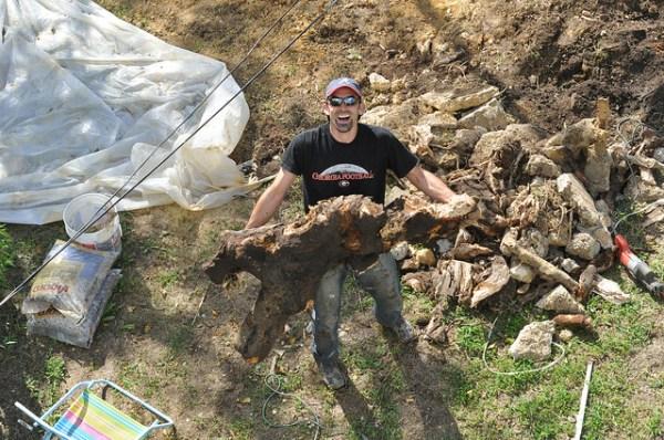 Digging out backyard stump