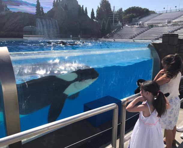 up close with orca at sea world