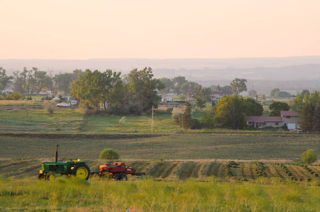 How a city girl becomes a homesteader. #homesteading #citygirl #countrygirl www.ourprovidenthomestead.com