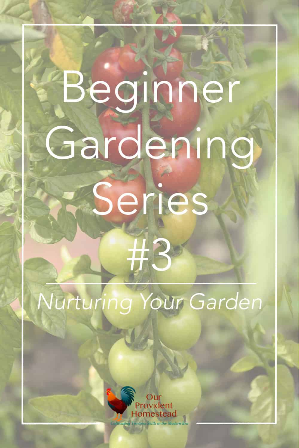 Are you new to gardening? Our beginner gardening series will help answer your questions, including nurturing your garden. Beginner Gardening | Nurturing Your Garden | Gardening Tips