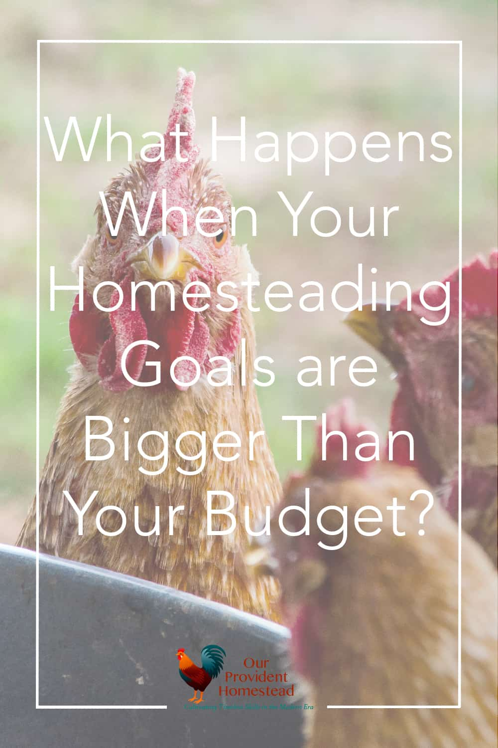 Do you have a homesteading budget? We discuss how to handle it when your homesteading goals are a lot bigger than your budget. Homesteading Budget | Homesteading Goals | Goals vs. Budget