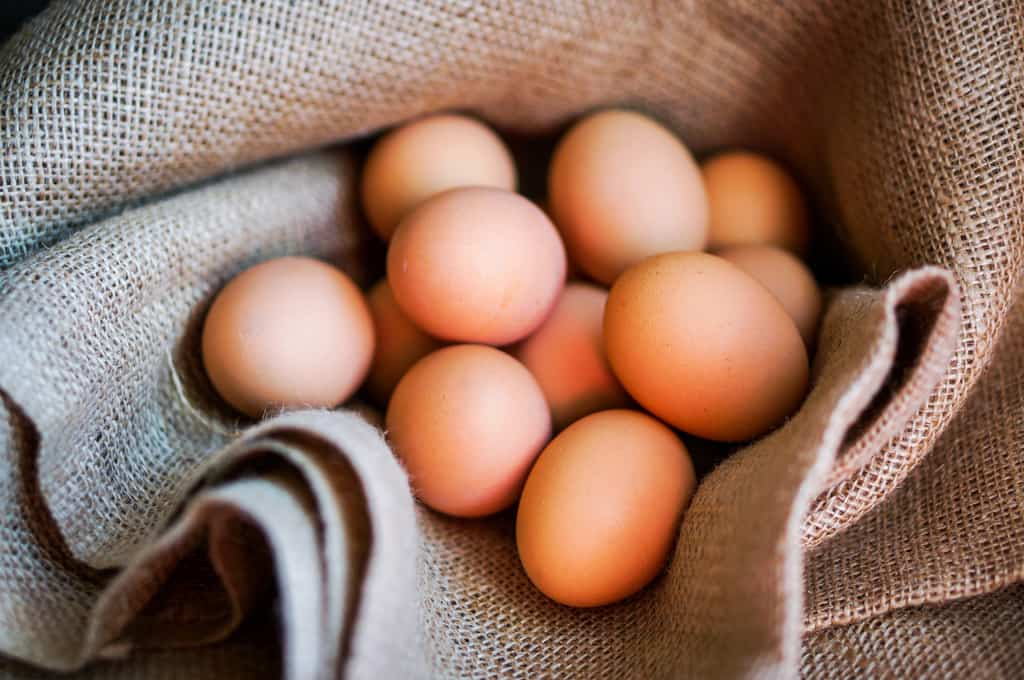 Are you thinking of adding laying hens to your homestead? We answer 10 questions about how to take care of your laying hens for optimal health. Raising laying hens   Chicken Care   Backyard Chickens