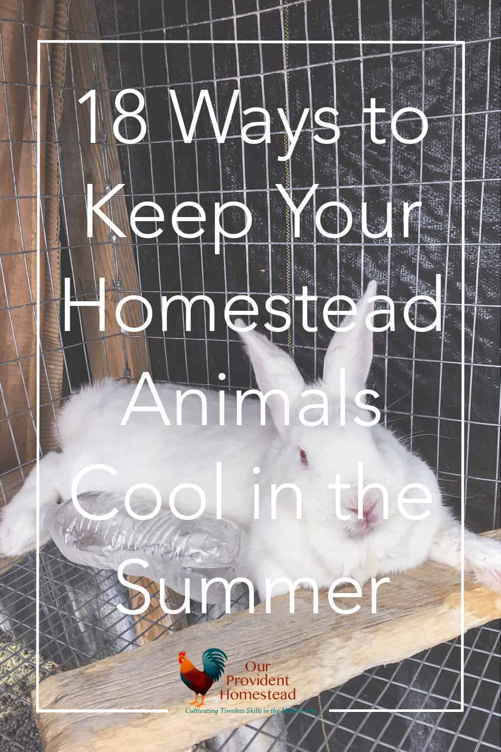 How do you keep your animals cool on the homestead during the summer? Click here for 18 ways to keep homestead animals cool in the summer heat. Summer | Keeping Animals Cool | Chickens | Rabbits