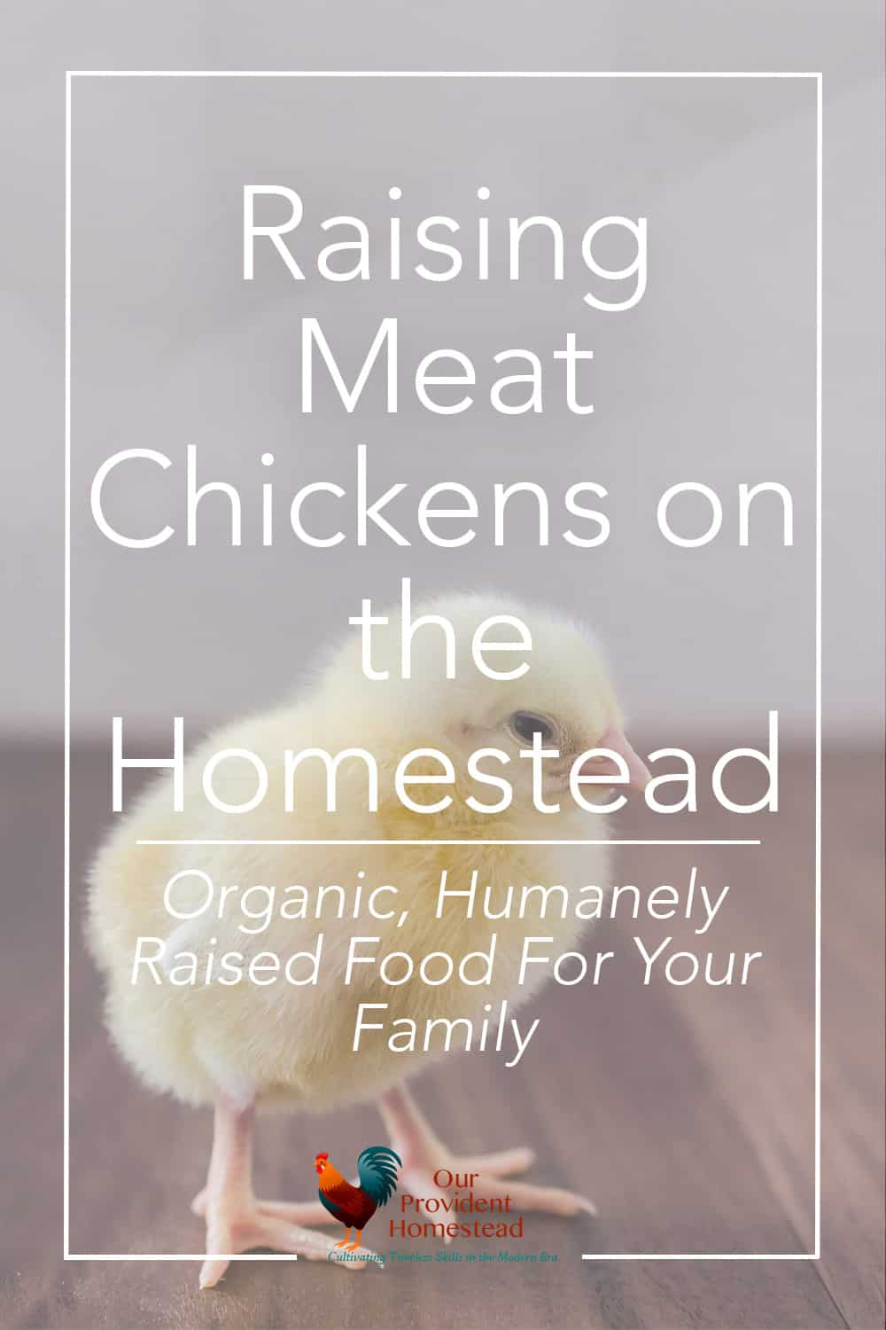 raising meat chickens on the homestead part 1