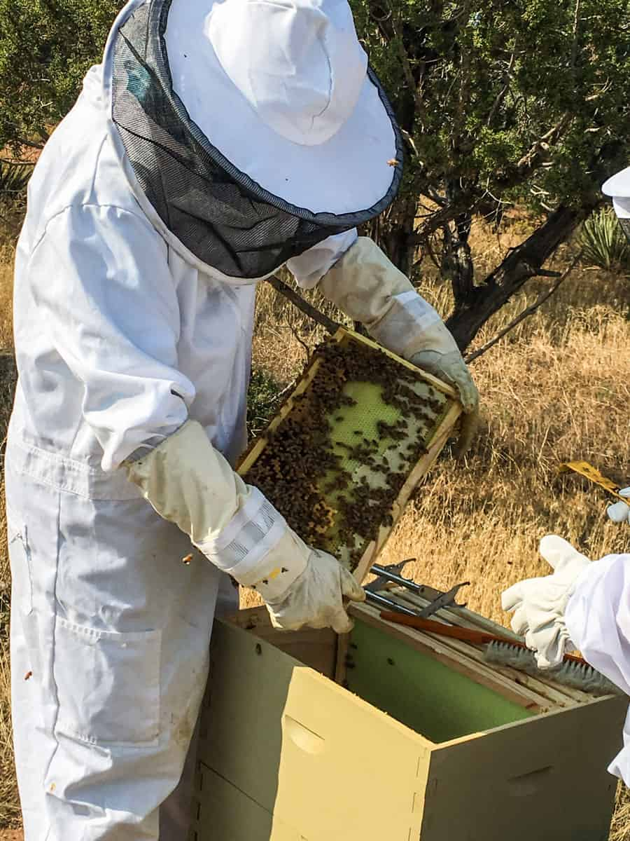 How are my honeybees doing this year? Click here to see the 7 lessons I have learned from my honeybees this year to be a better beekeeper. Beekeeping   Honeybees   Lessons Learned