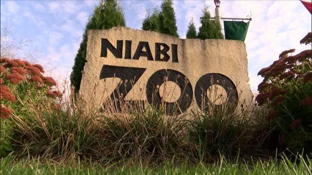 NiabiZoof1881c3e-e0de-41fd-8ad4-517745f4f938_5100317_ver1.0_640_360_1537819856012.jpg