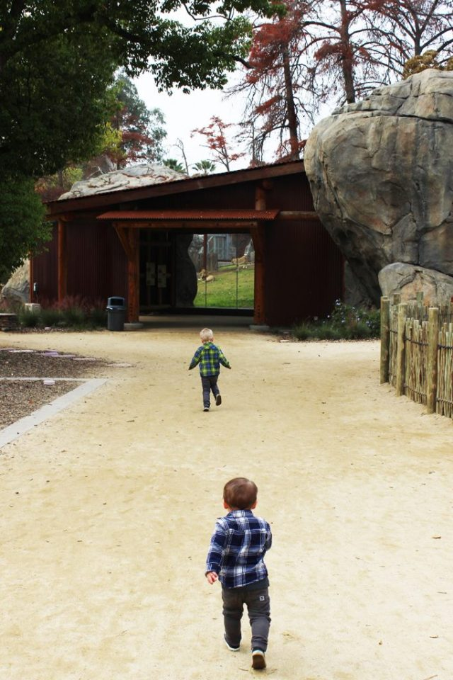 Walkway to Lion Exhibit