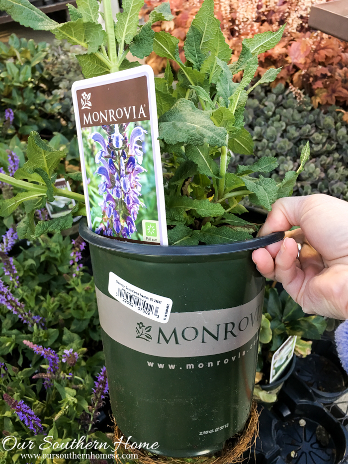 Get your yard ready for summer by planting this spring with plants from Monrovia. #ad #GrowBeautifully #MonroviaPlants