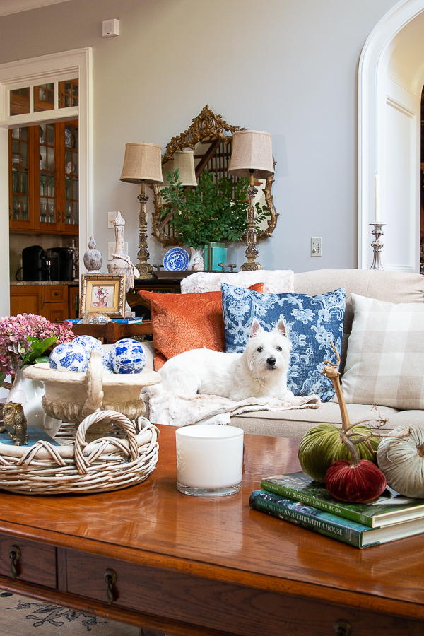couch dressed for fall with dog