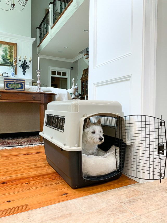 don in a kennel