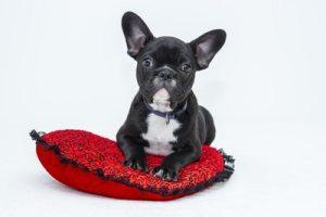 Stemenhance for animals