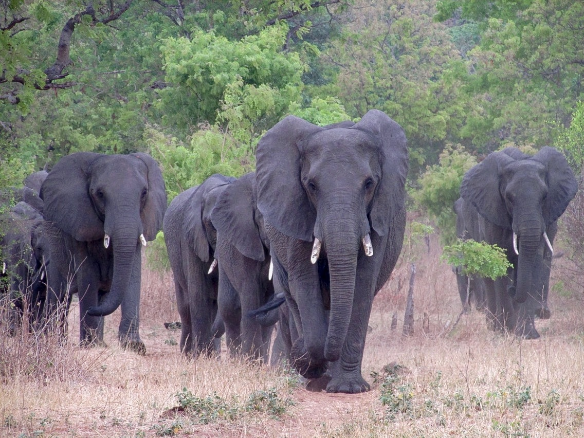 An Amazing Day Trip to Chobe National Park - Our Sweet Adventures