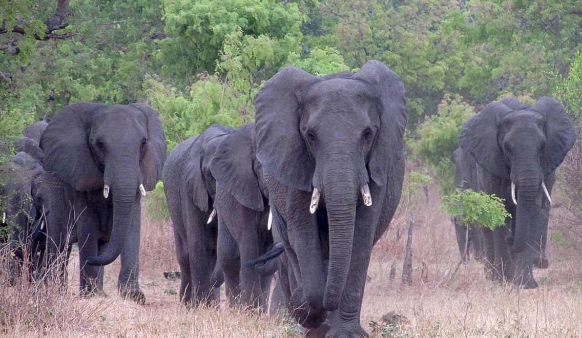 An Amazing Day Trip to Chobe National Park