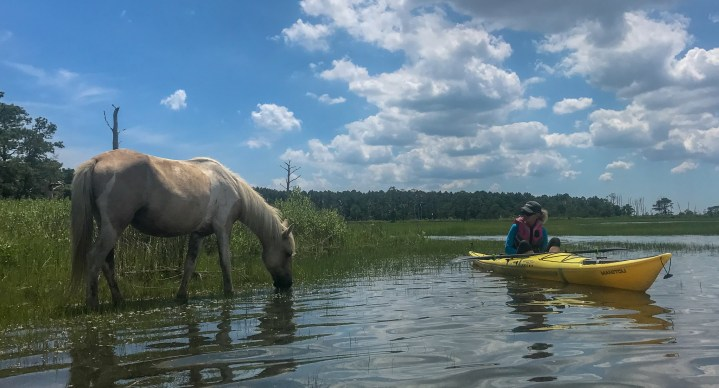 The best way to see the wild Chincoteague horses is by an eco-kayak tour. Just look at how close we were to this beautiful animal!