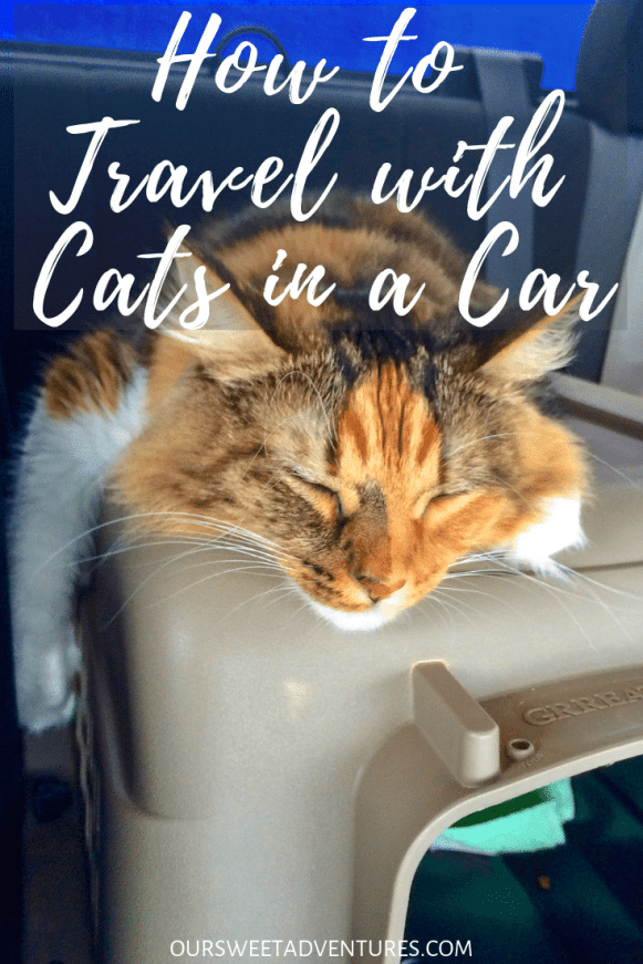 It is not easy to travel with cats in a car. You must know what they need and want. Through trial and error, I have found the PURRFECT way to travel with cats in a car long distance. I have everything you need to know including what to pack, hotels to pick and more.