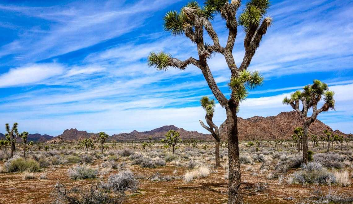 How to Have the Perfect Day Trip to Joshua Tree National Park