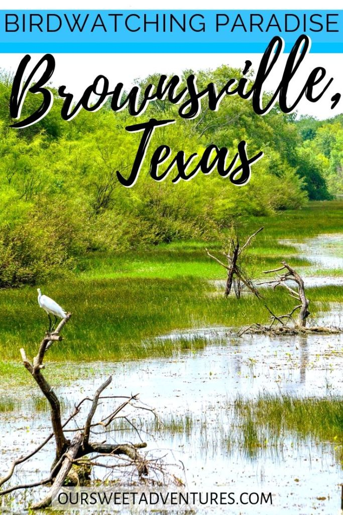 "A photo of a white crane perched on wood in the middle of a valley. Text overlay ""Birdwatching paradise Brownsville, Texas""."