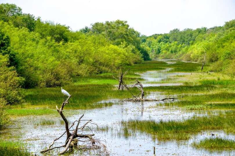 One of the best things to do in Brownsville is bird watching as shown in this picture of a crane perched in a valley at the Resaca de la Palma State Park.