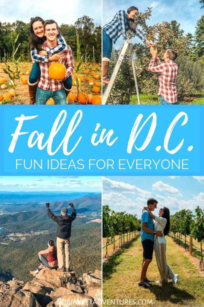 """A 4 picture collage of the same couple posing. One is them at a pumpkin patch. Second is them picking apples. The third is standing on the edge of a mountain. The last one is standing in a wine vineyard. Text overlay """"Fall in D.C. Fun ideas for everyone."""""""