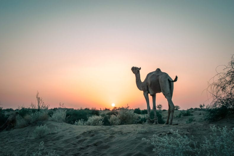 low priced 6410e 21578 JAISALMER OVERNIGHT CAMEL SAFARI THAR DESERT SUNSET