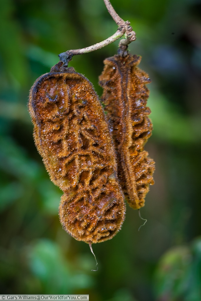 A delicate seed pod