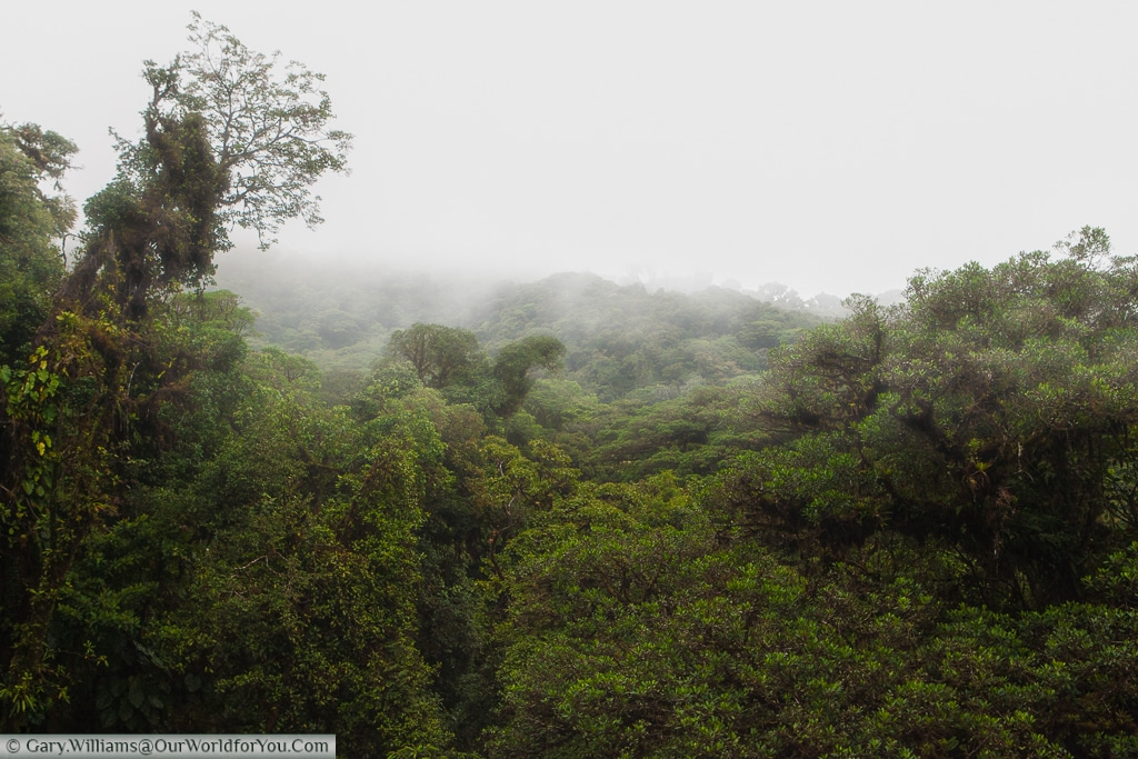 As expected, the clouds roll over the top of the Cloud Forest Reserve
