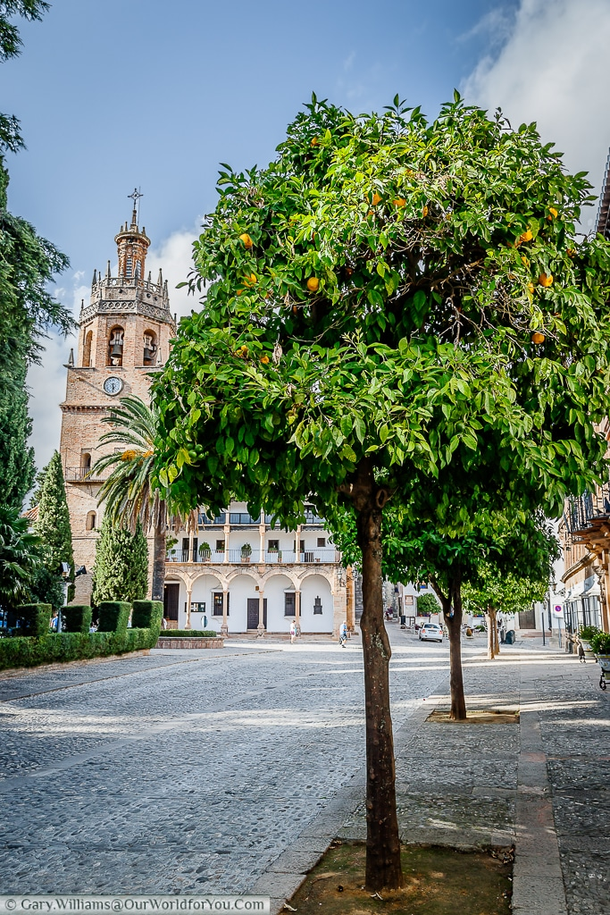 The orange tree lined Plaza Duquesa de Parcent with the Parroquia Santa María la Mayor in the background.