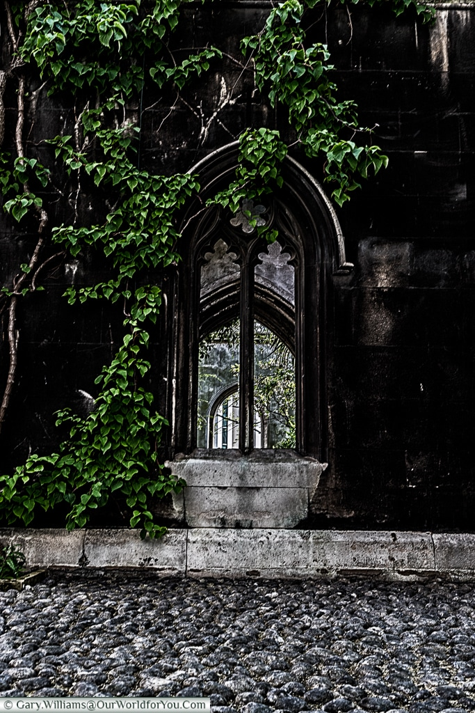 Life clings to the ruins, St Dunstan's in the East, City of London, UK