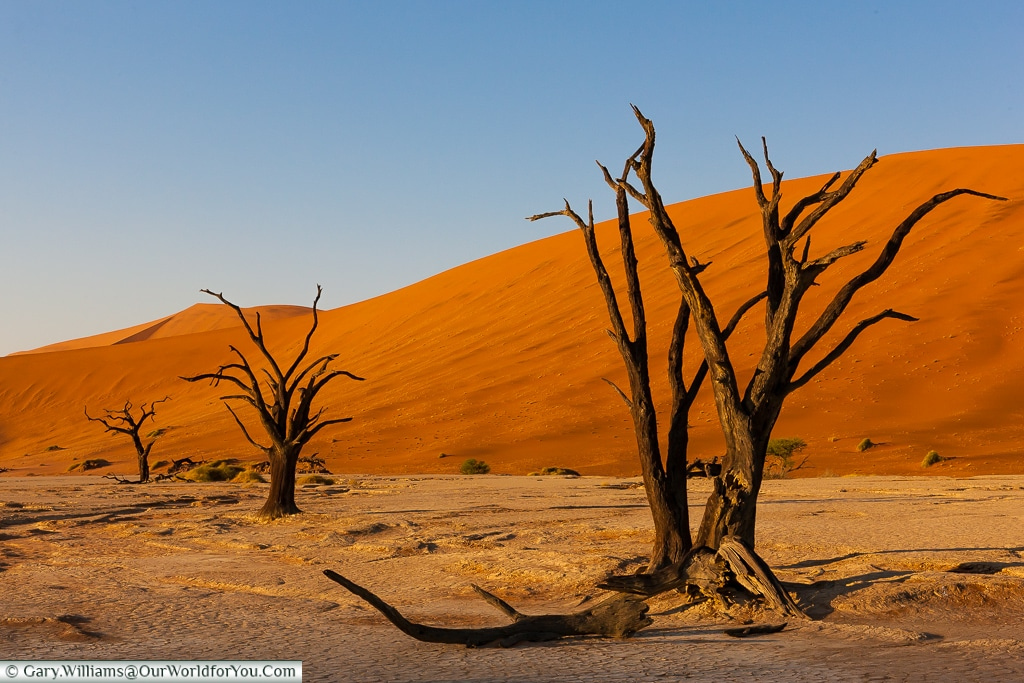 Petrified Trees in the pan of Deadvlei,  Sossusvlei, Namibia
