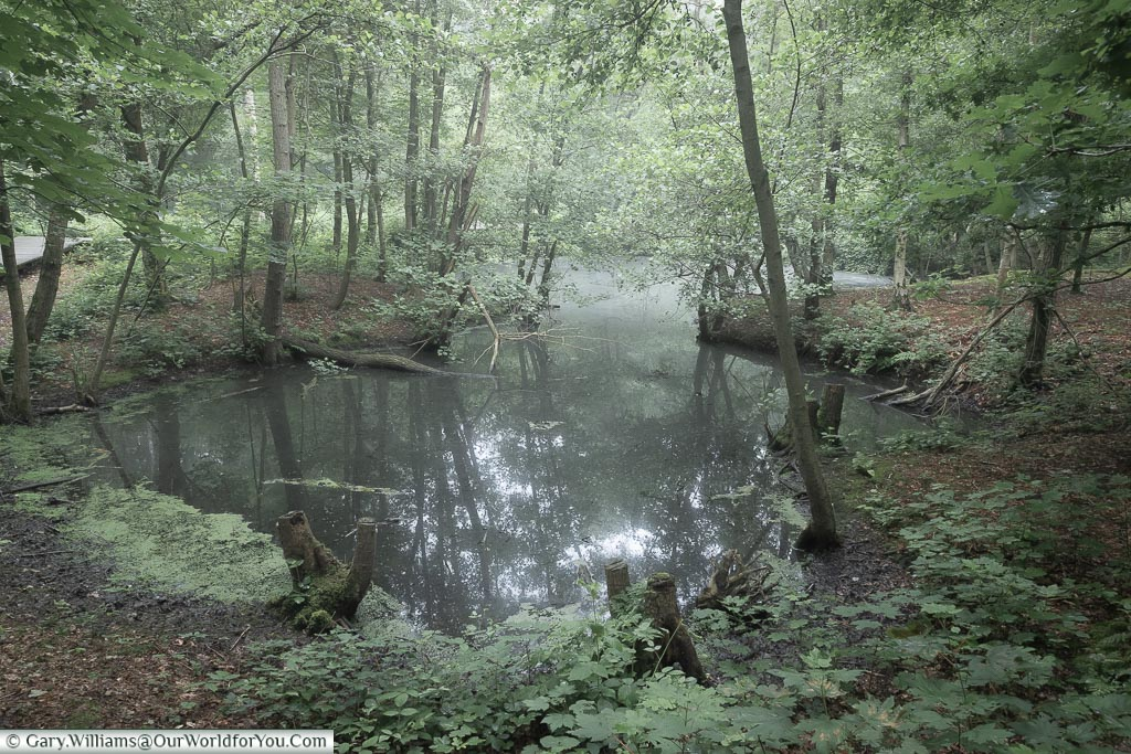 A pond in a crater, Belgium