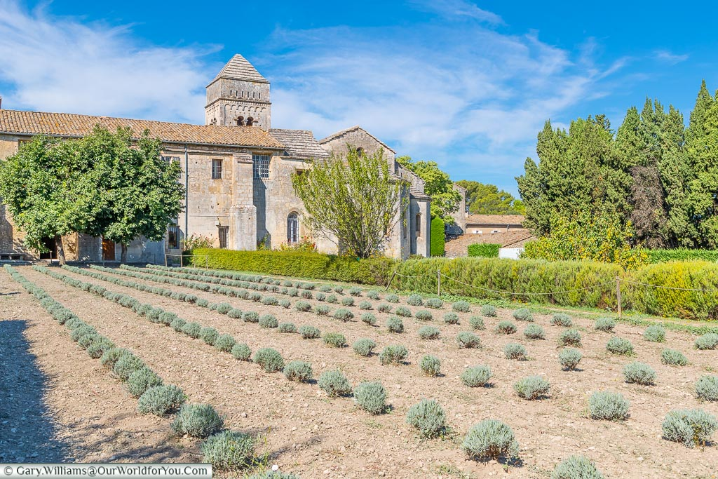 The gardens of the Monastery, St Remy-de-Provence, France