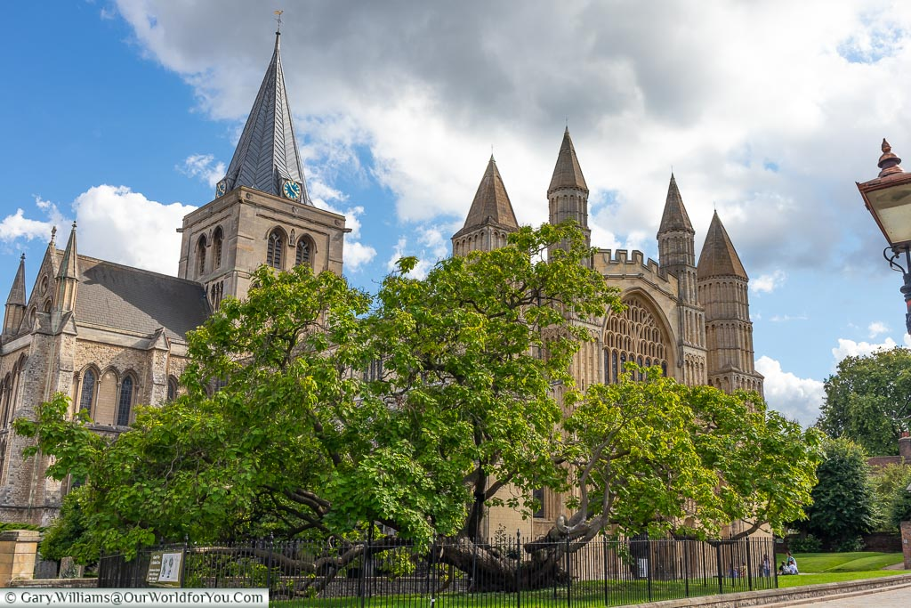 Rochester Cathedral & Catalpa Tree, Rochester Cathedral, Rochester, Kent, England, UK