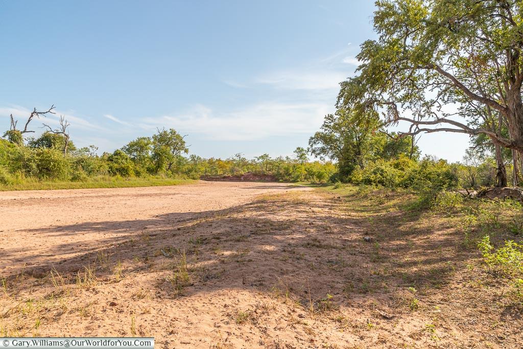 A welcome bit of shade, Bush Walk, Rhino Safari Camp, Lake Kariba, Zimbabwe