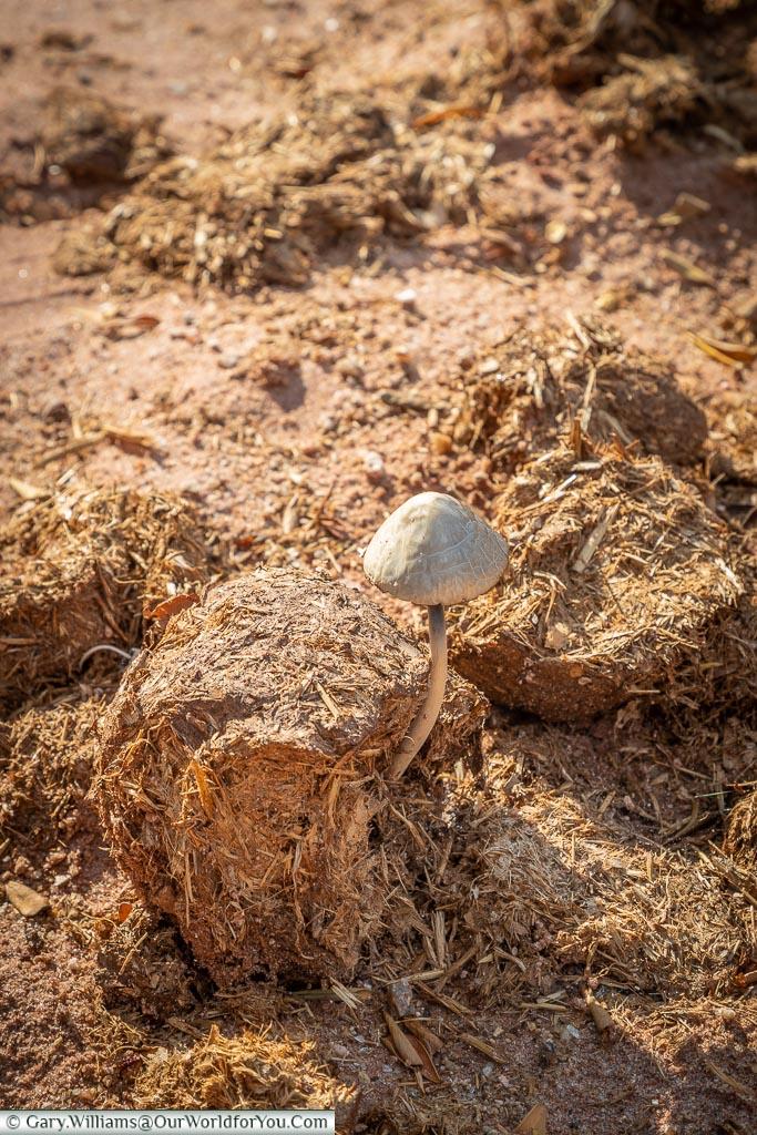 Don't think I'll eat this mushroom, Bush Walk, Rhino Safari Camp, Lake Kariba, Zimbabwe