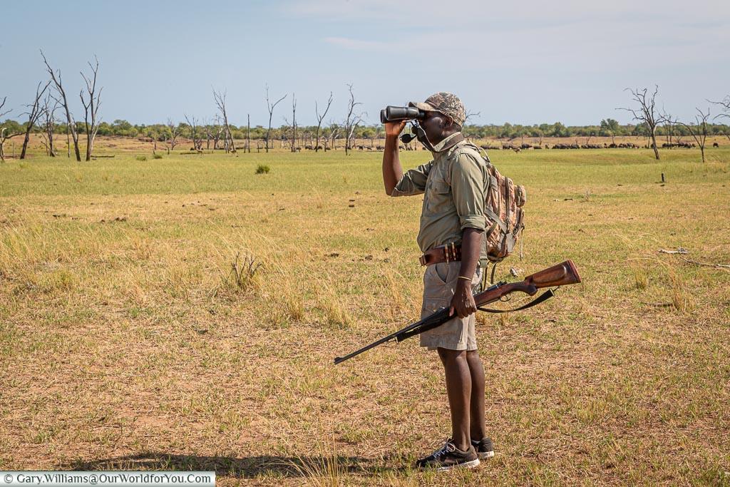 Tettindra keeping an eye out, Bush Walk, Rhino Safari Camp, Lake Kariba, Zimbabwe