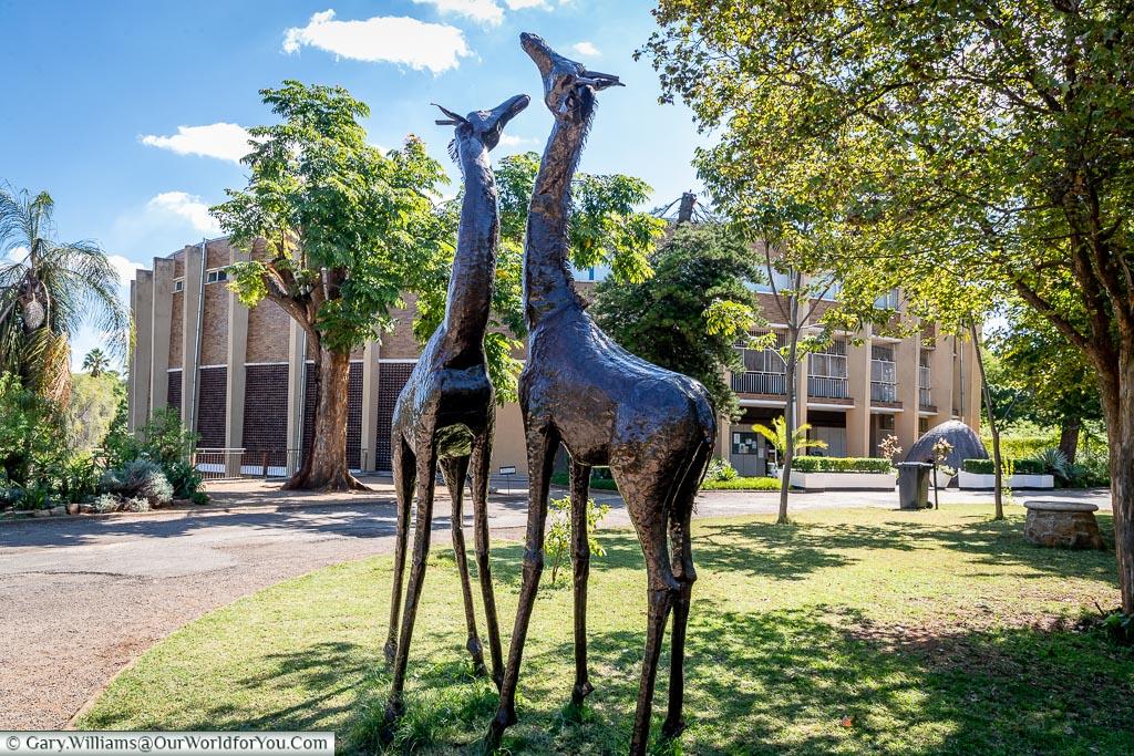 Two metal giraffe statues standing outside the Bulawayo National Museum.
