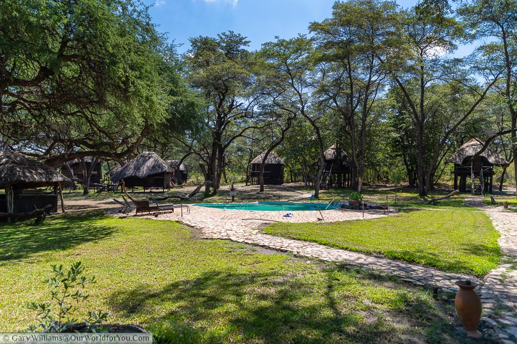 A path leading to the swimming pool in the centre of the camp with the tree lodges blending in with the trees around the camp.