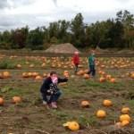 Pickin' Pumpkins at The Pickin' Patch