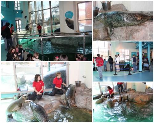 Maritime Aquarium2