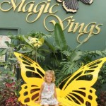 See Thousands of Butterflies at Magic Wings Butterfly Conservatory & Gardens